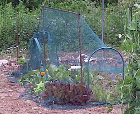 garden netting for rabbits and deer