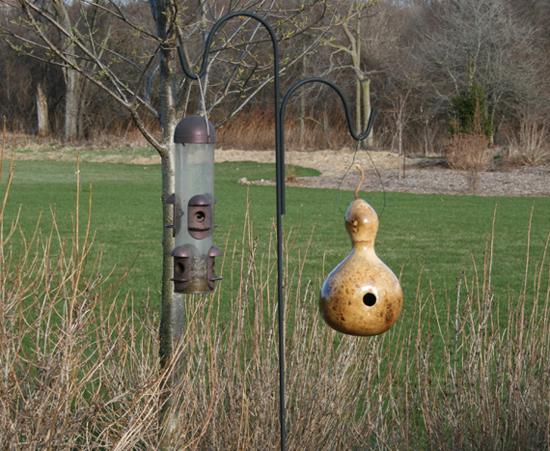 Birdhouse Gourds in the Garden