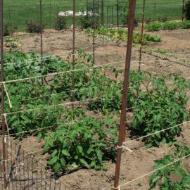 crop rotation vegetable gardening